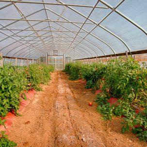 Greenhouse Aliabaad Farm 4040 Mills Rd
