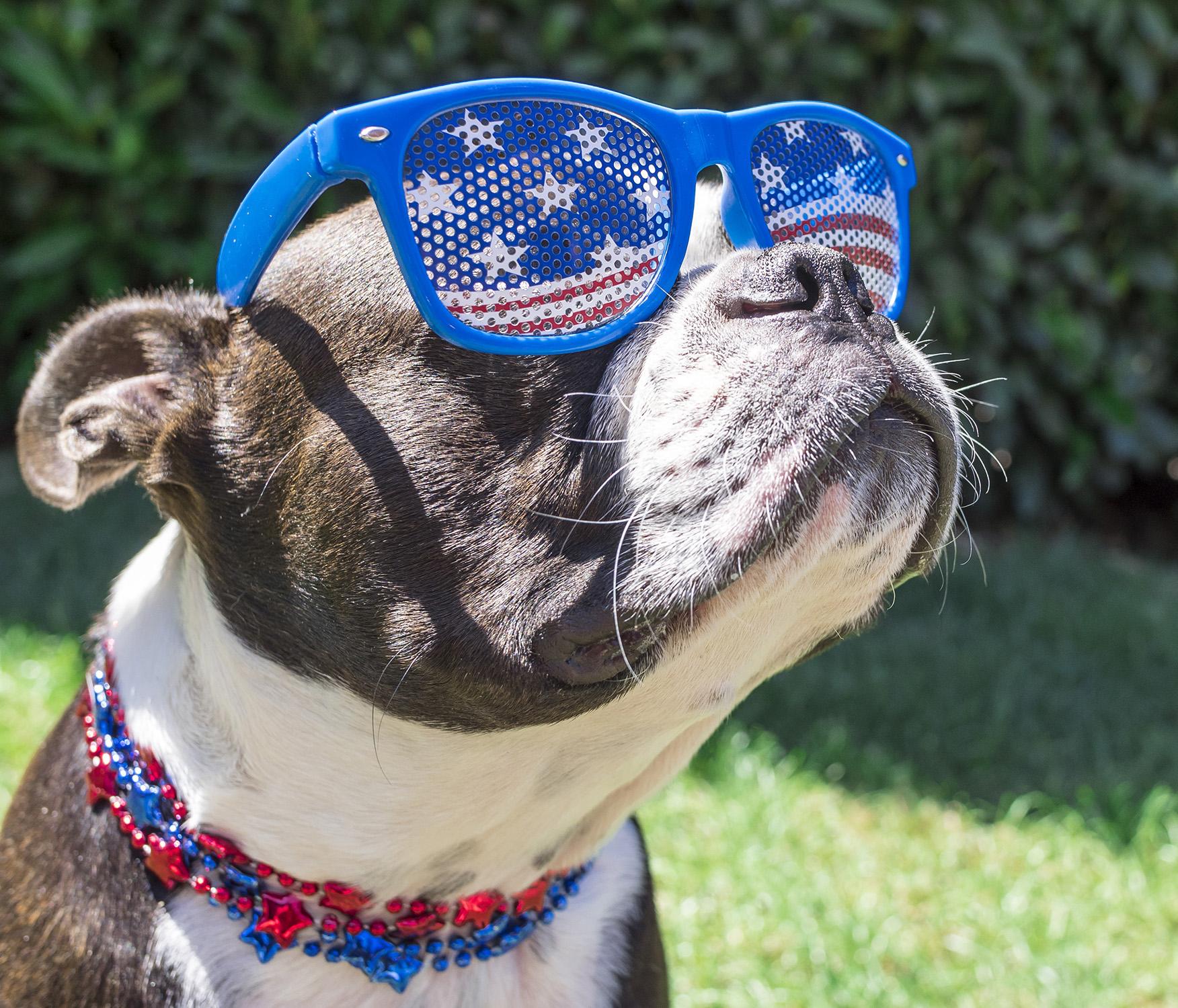 Fourth of July Safety Photo of Dog